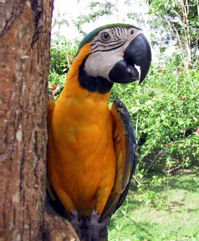photograph of a macaw